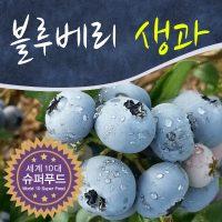 블루베리 생과 2kg/생블루베리/전북 장수 당일수확/품종별 구분포장/500g*4팩